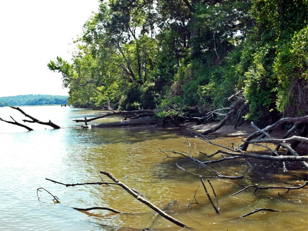 These fallen trees, the tops of which lay in over 10 feet of water, are an excellent example of visible structure.