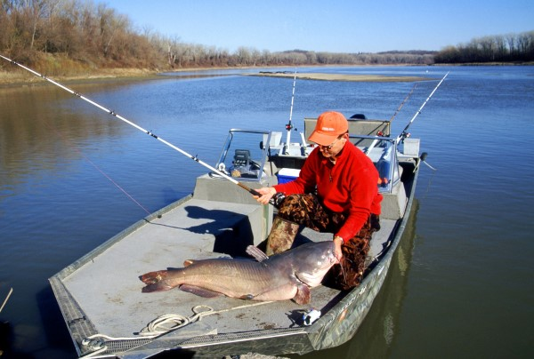 Catching a nice blue cat like this is always a possibility during the summer-to-autumn transition period when cats start feeding heavily to put on winter energy stores.